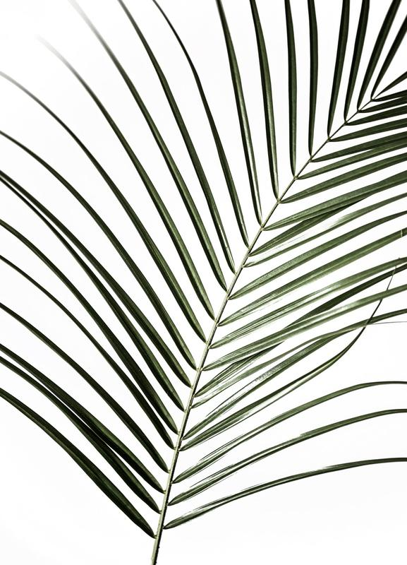 Palm Leaves 8 Canvas Print