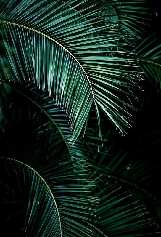 Palm Leaves 9 alu dibond