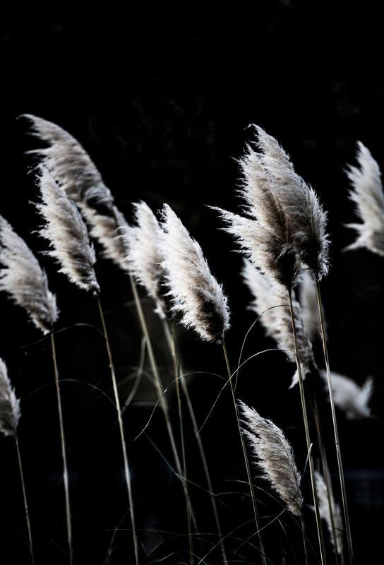 Grass 4 -Alubild