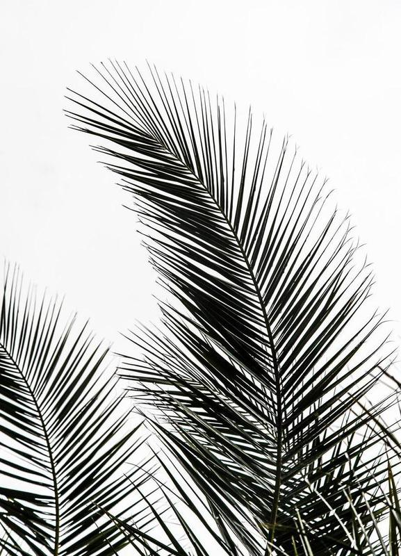 Palm Leaves 1 Canvas Print