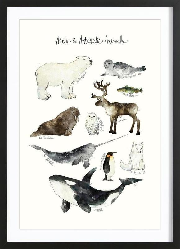Arctic and Antarctic Animals Framed Print