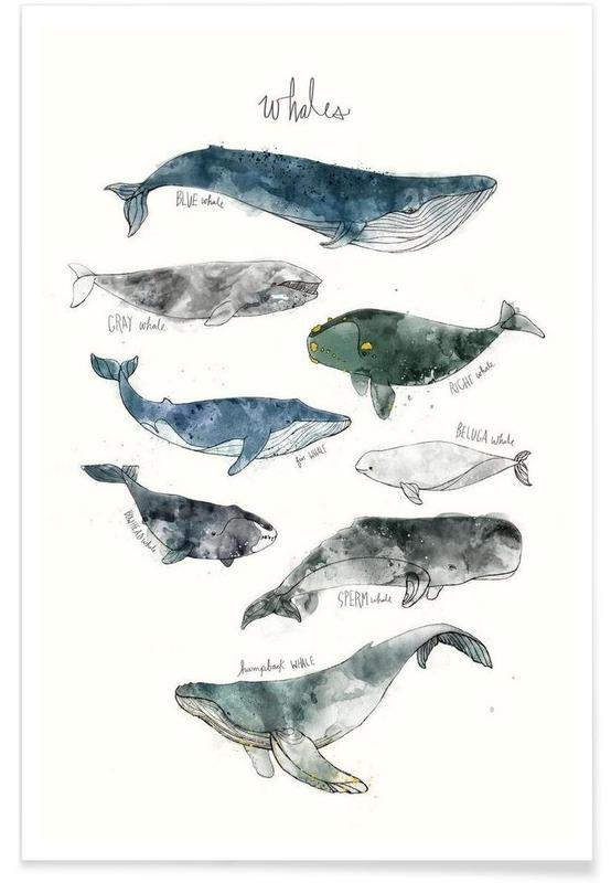 Whales Illustration poster