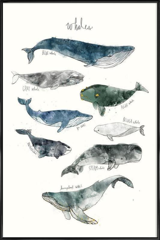 Whales -Bild mit Kunststoffrahmen
