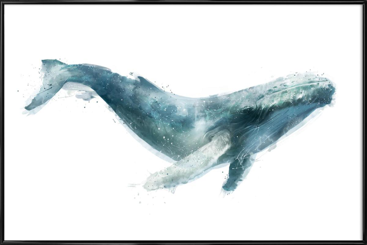 Humpback Whale Framed Poster