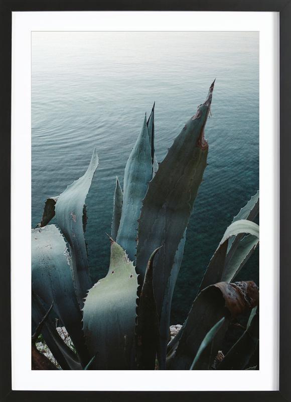 Agava -Bild mit Holzrahmen