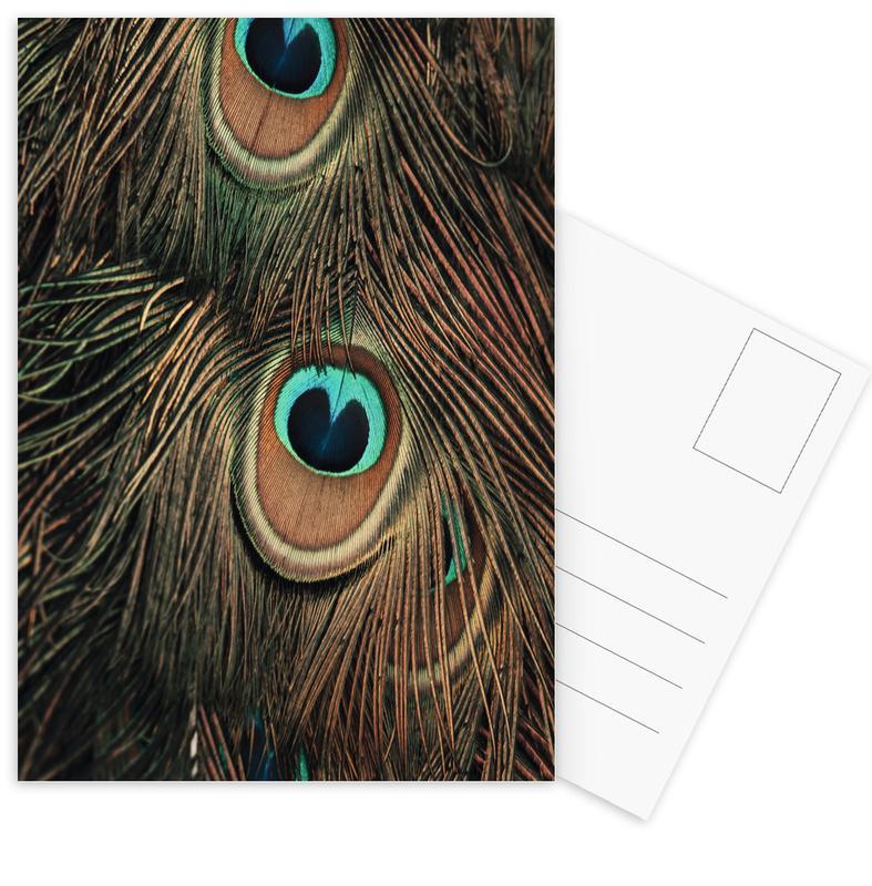 Peacock Feathers Postcard Set
