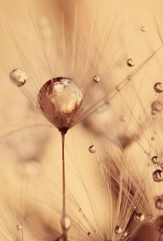 a touch of gold Acrylglasbild | Dekoration > Bilder und Rahmen > Bilder