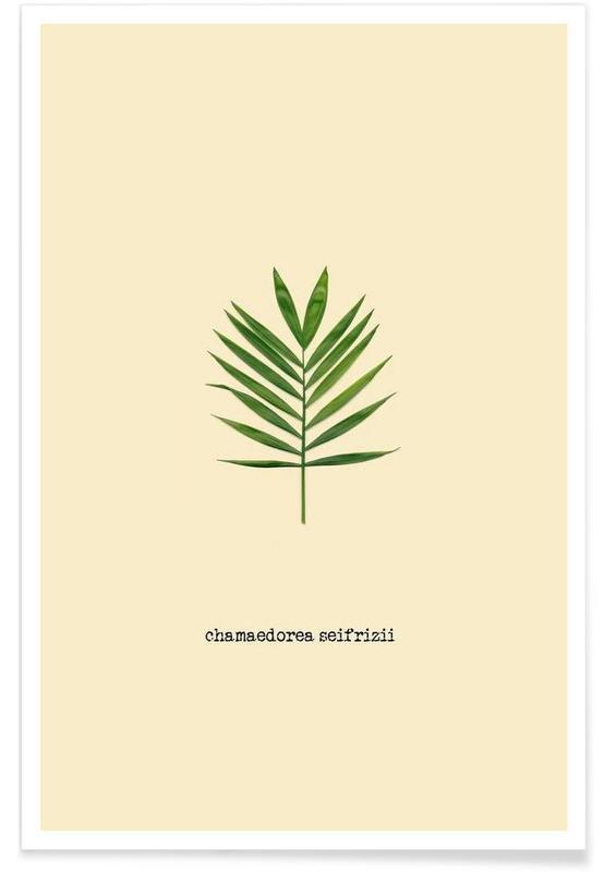 Chamaedorea Seifrizii -Poster