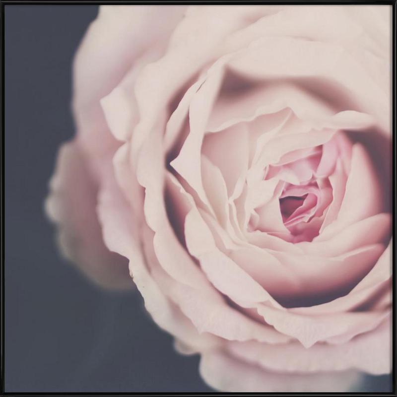 Rose Pink Framed Poster
