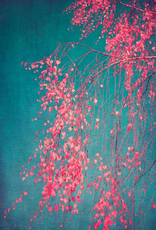 Whispers Of Pink Alu Dibond Print