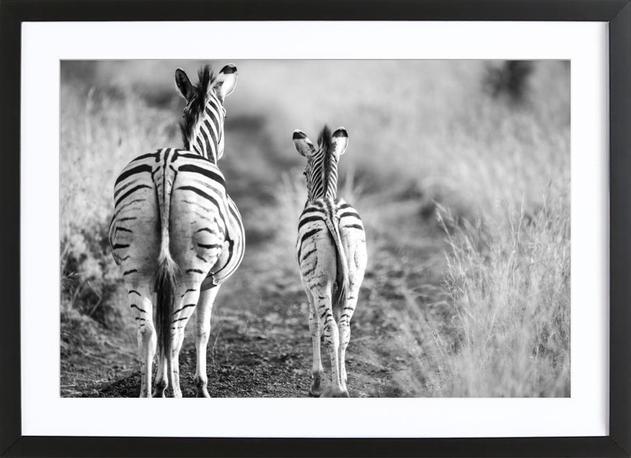 Zebra family ingelijste print