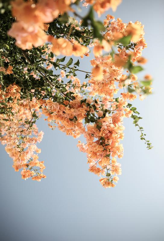 Assos Blooms Alu Dibond Druck | Dekoration > Bilder und Rahmen > Poster | Mehrfarbig | Aluminium