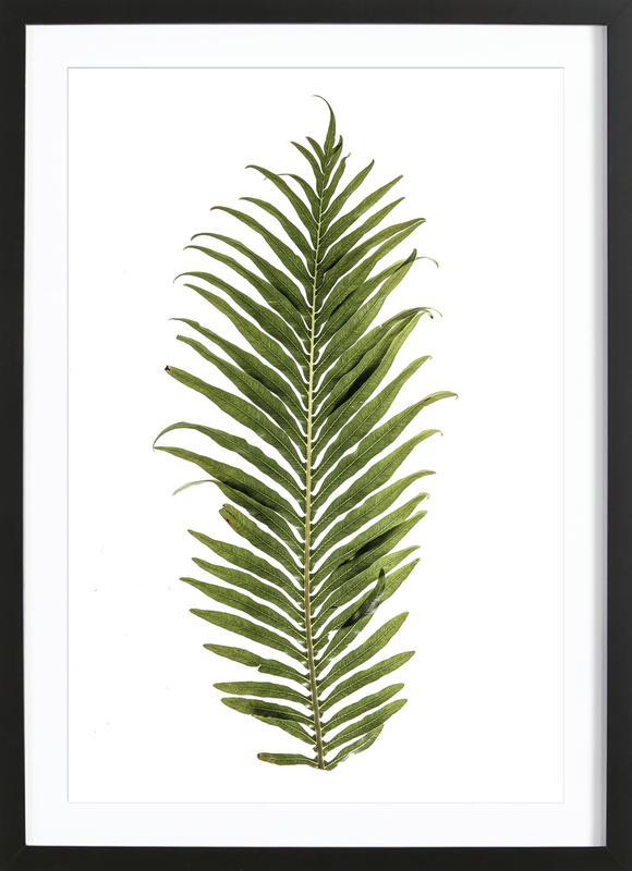 Leaf Study 1 Framed Print