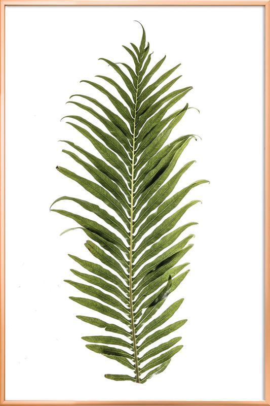 Leaf Study 1 Poster in Aluminium Frame
