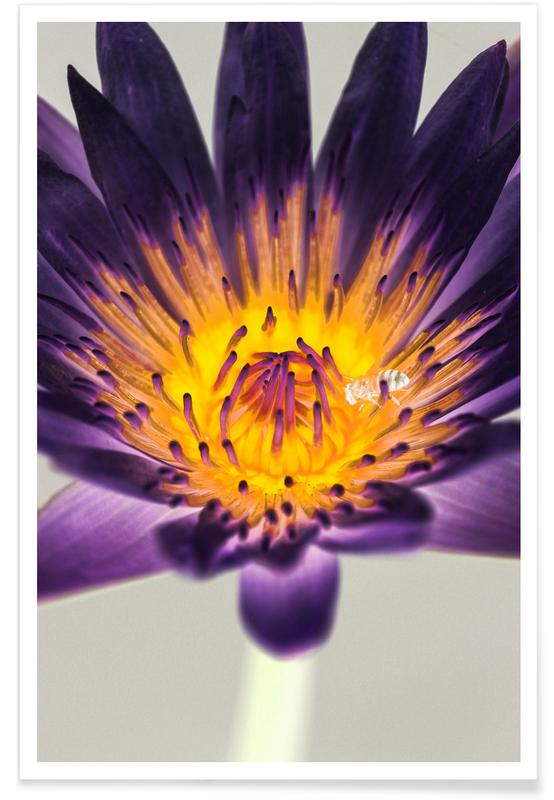 Water Lilly -Poster