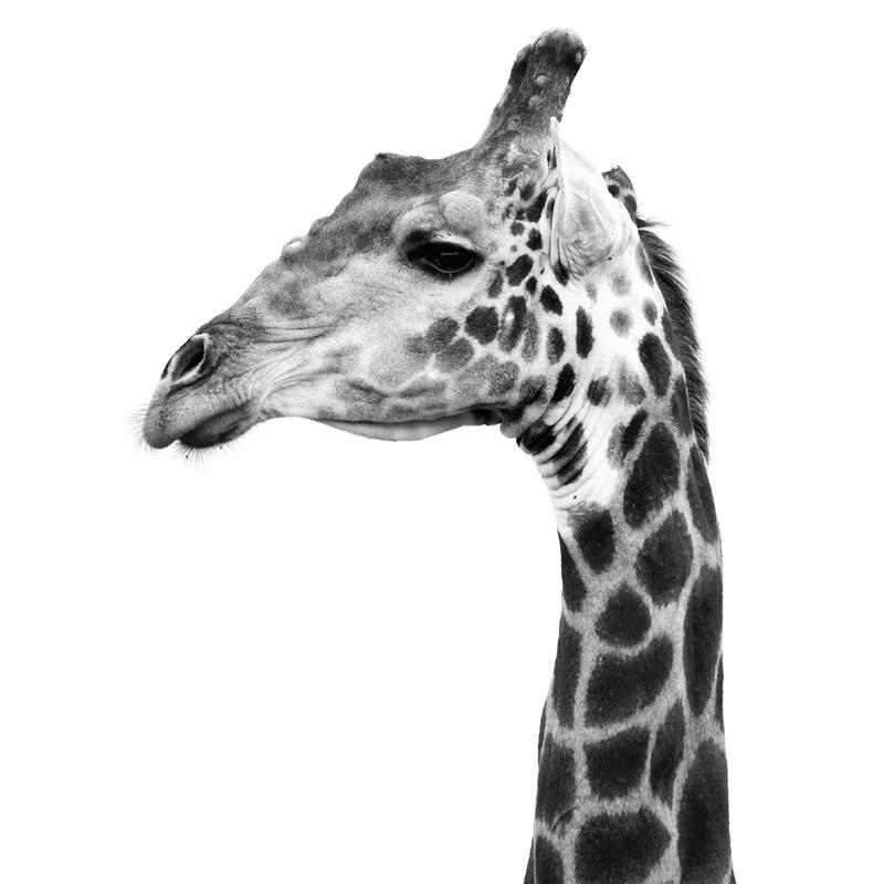 Africa Cropped 01 Acrylglasbild | Dekoration > Bilder und Rahmen > Bilder | Mehrfarbig | Aluminium