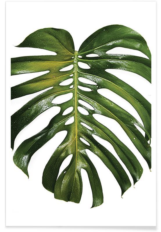 Tropical Heat 011 Plakat
