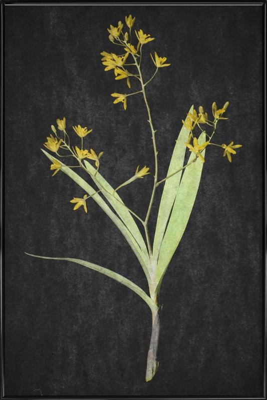 Muti Orchid -Bild mit Kunststoffrahmen