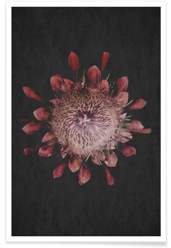 Fynbos Protea -Poster