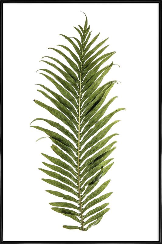 Baobab Leaf ingelijste poster