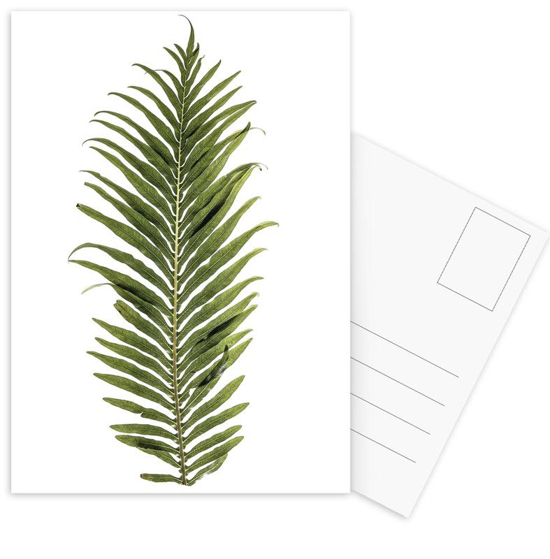 Baobab Leaf Postcard Set