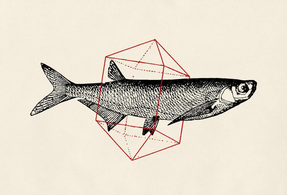 Fish in Geometrics II -Acrylglasbild