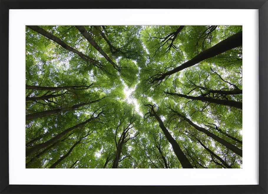 Beechwood Framed Print