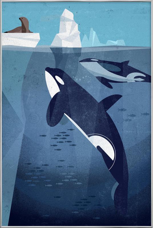 Orca Poster in aluminium lijst