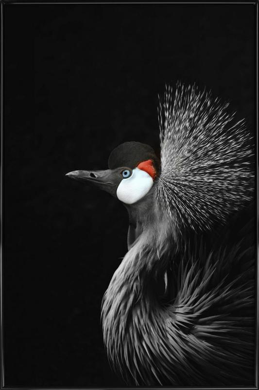 Black Crowned Crane Framed Poster