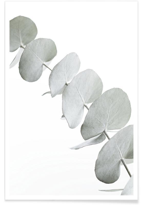 Eucalyptus White 3 Poster