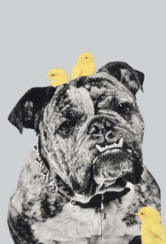 bulldog acrylglasbild