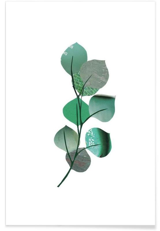 Eukalyptus -Poster