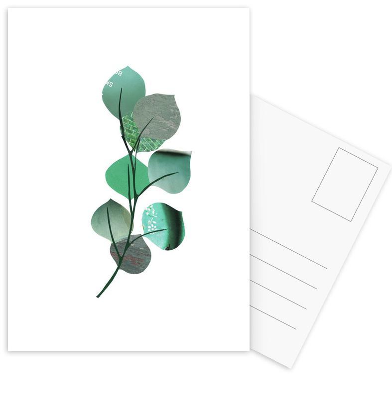 Eukalyptus Postkartenset