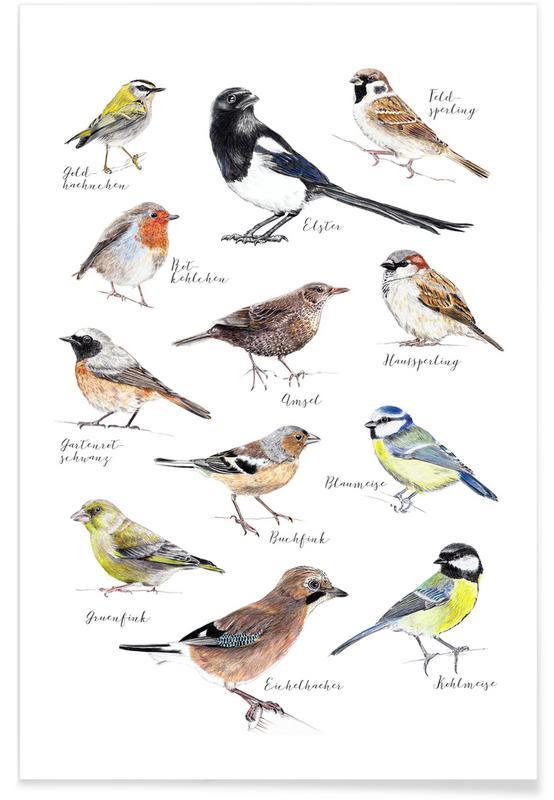 Vogel illustratie poster