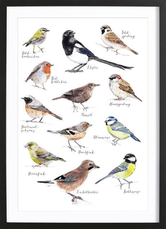 Plakat Vögel Premium Poster gerahmt