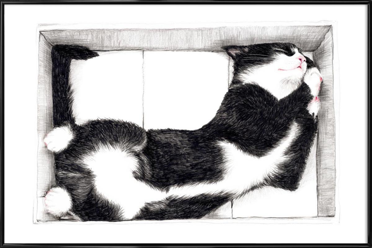 Katze im Karton Framed Poster