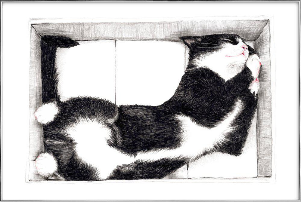 Katze im Karton Poster im Alurahmen