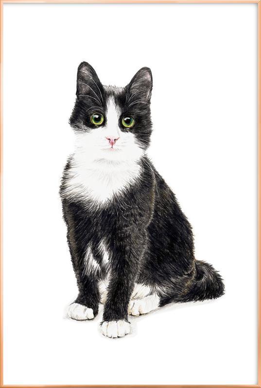 Katze Murmelauge Poster im Alurahmen