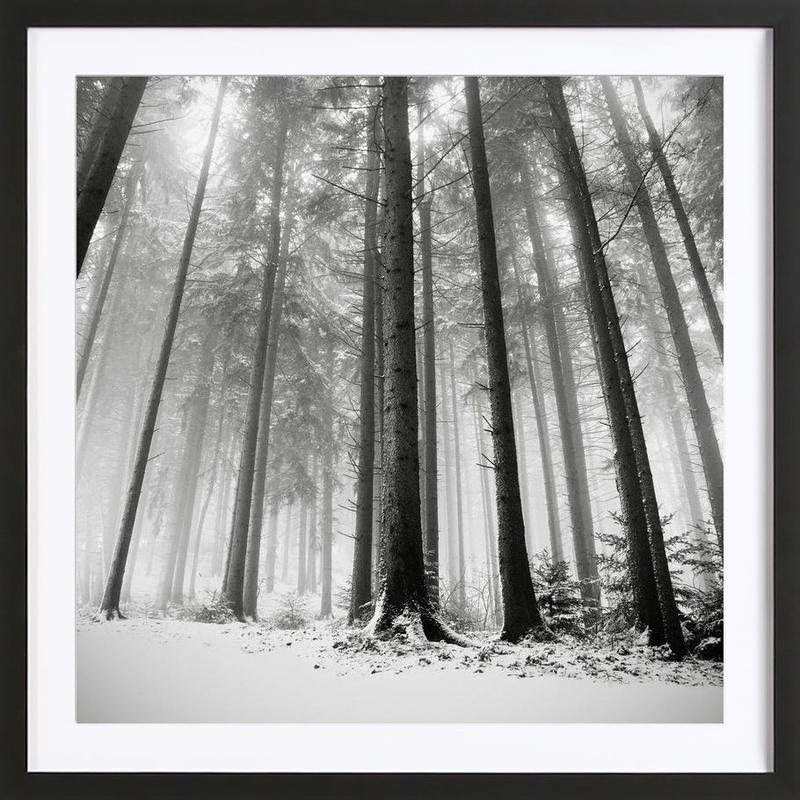 Nur Die Wälder Wissen Warum Premium Poster gerahmt