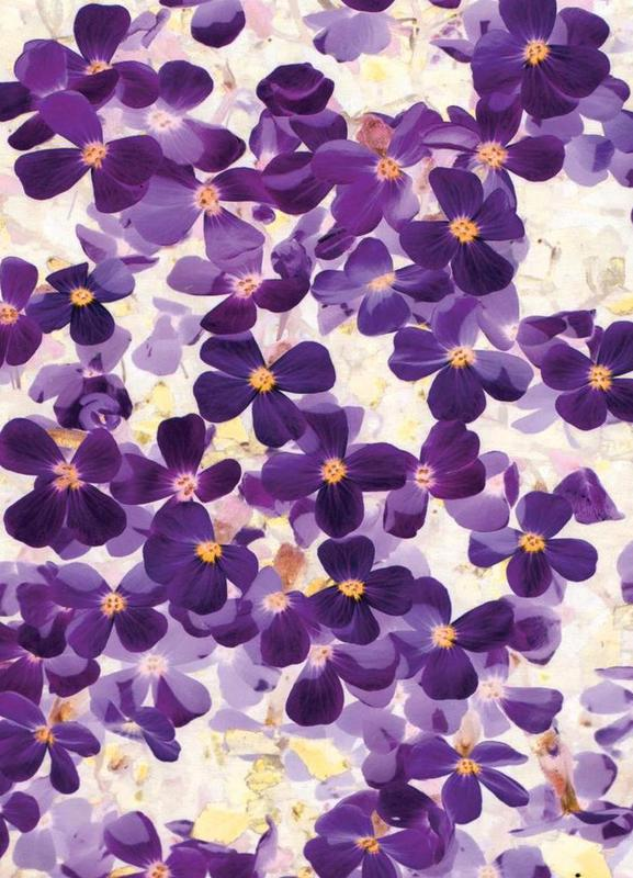 Violet Bloom Canvas Print