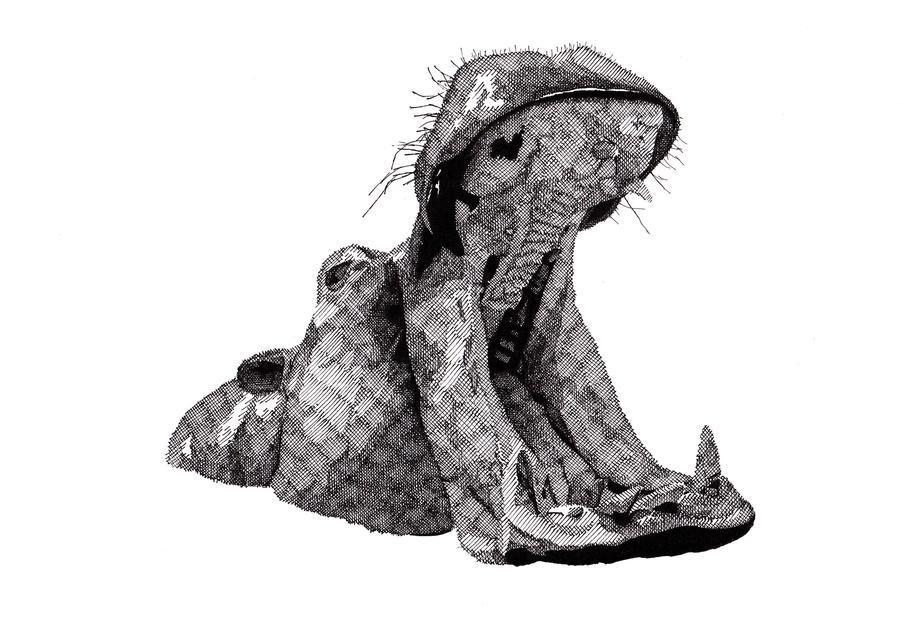 Hippo Aluminium Print