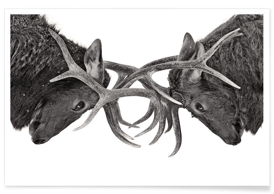 Eye to Eye - Elk Fight - Jim Cumming poster