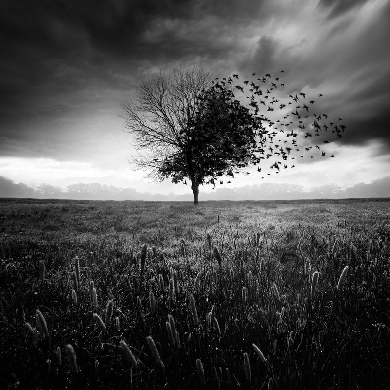 Illusion d'un printemps perdu -Acrylglasbild