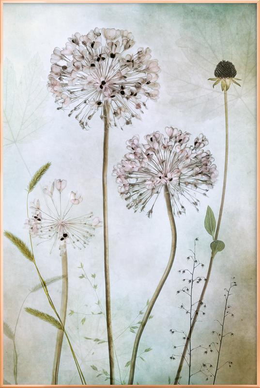 Allium Poster in Aluminium Frame