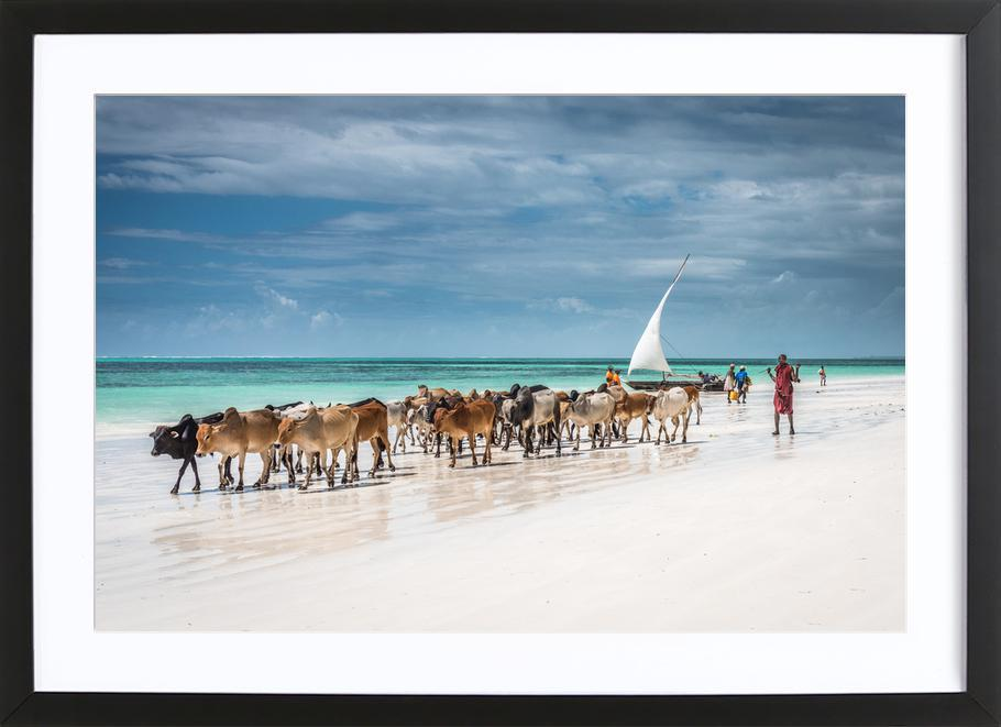 Masai Cattle on Zanzibar Beach -Bild mit Holzrahmen
