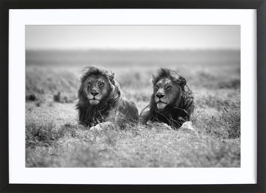 Two Kings - Nicolas Merino -Bild mit Holzrahmen