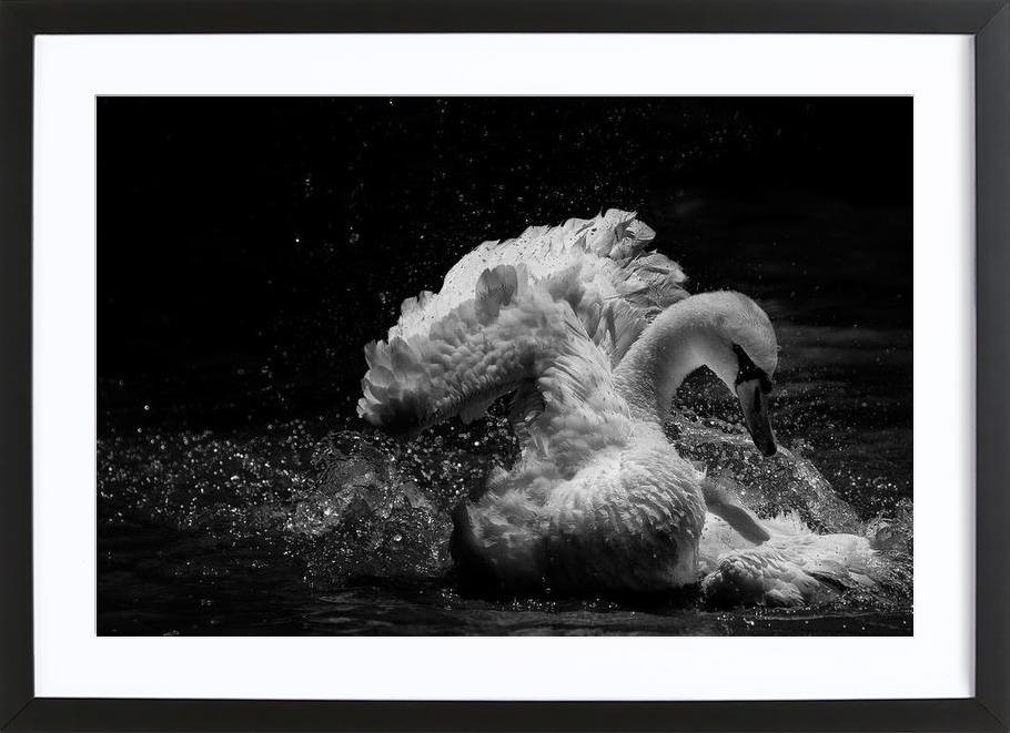 In Motion - C.S. Tjandra -Bild mit Holzrahmen