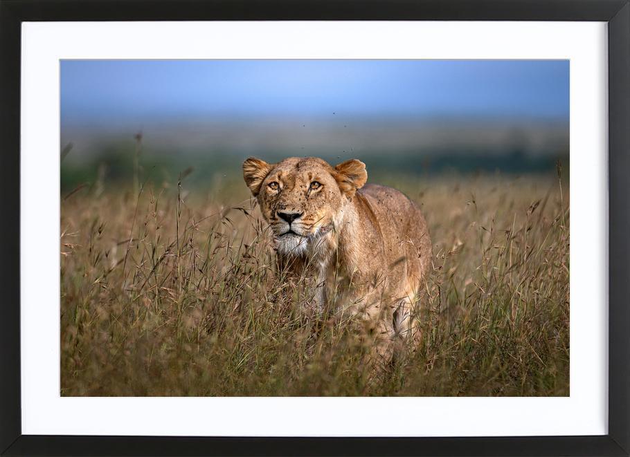 On the Prowl - Xavier Ortega -Bild mit Holzrahmen