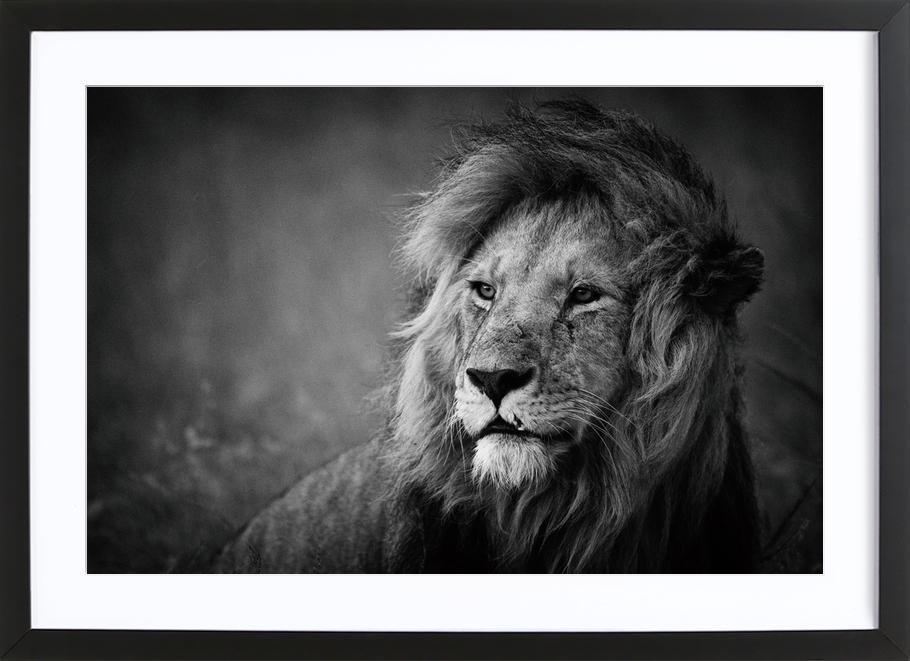 Regal - Mohammed Alnaser Framed Print