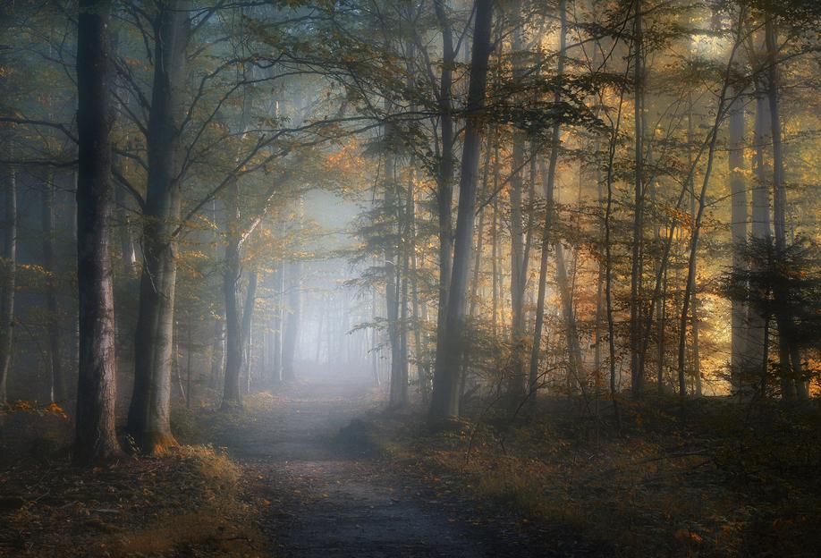 Autumn Symphony - Norbert Maier Aluminium Print